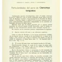 TALICE, Rodolfo; LAGOMARSINO, Julio C. - Particularidades del pene de Ctenomys torquatus.PDF